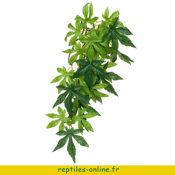 Croton exo terra large reptiles online for Plante jungle